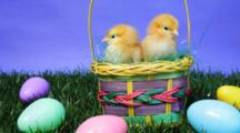 Baby Chicks In An Easter Basket