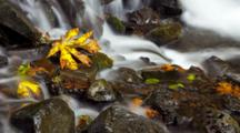 Autumn Leaf In A Time Lapse Stream, Pan And Tilt