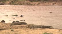 Crocodiles Lie By River