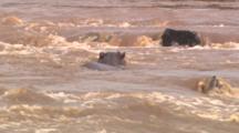 Hippo In River