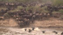 Wildebeest Herd Plunges Into River, Front View