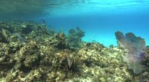 Coral Reef Scenery, Travel Over Top