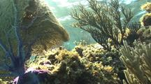 Coral Reef Scenery, Sea Fans, Soft Corals