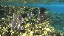 Coral Reef Scenery, Top Of Reef, Sunlight Patterns