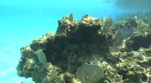 Coral Reef Scenery, Along Reef Edge, Sandy Bottom