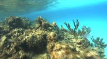 Coral Stock Footage