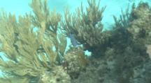 Coral Reef Scenery, Movement Of Soft Corals