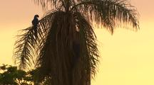 Macaw In Palm Tree