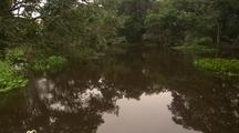 Going Down Pantenal River, Passing Lush Greenery