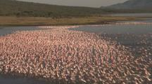 Aerial Kenya Rift Valley, Flamingos Taking Flight On Lake