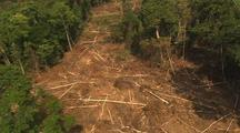 Aerial View Of Malaysia, Freshly Logged Clearing, Dense Forest