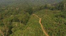 Aerial View Of Malaysia, Palm Plantation, Roads, Logged Clearing