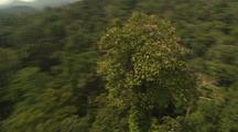 Aerial View Of Malaysia, Dense Forest, Circle Very Tall Tree