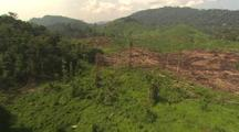 Aerial View Of Malaysia, Palm Plantation, Logged Clearing