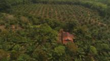 Aerial View Of Malaysia, Palm Plantations, Fresh Clearing