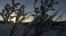 Cross Country Skiers Pass Behind Snowy Branches, Sun Low In Sky
