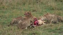 Cheetah Eating A Grant's Gazelle