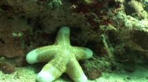 Cushion Sea Star Below Red Sponge