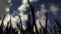 Tilt Down Tall Cactus