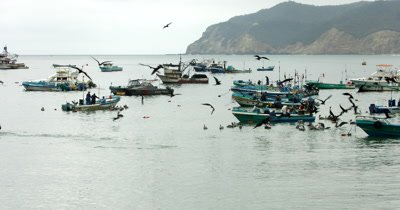 Wide Shot of boats in the harbour of Puerto Lopez, with Peicans bobbing on the sea and Frigate Birds flying.