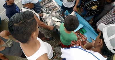 Catch of the day at Puerto Lopez Fish Market