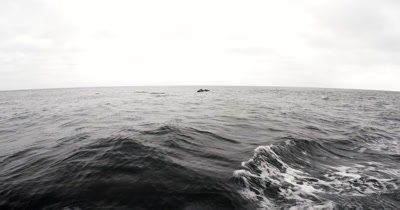 Wide shot of A school of Dolphins swimming past