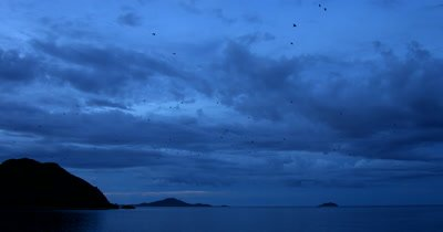 WS Sunset at Kalong Island,Komodo, Indonesia with fruit bats,Sunda Flying Foxes, flying from the island