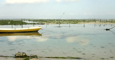 Wide Shot, panning across to a boat, of the Seaweed framing area, Eucheuma spp.