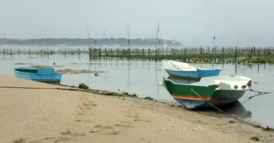 Wide Shot, across some boats, showing the  Seaweed framing area behind them, Eucheuma spp.