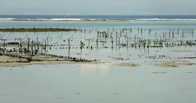 Wide shot of two seaweed farmers heading out to work, carrying their goods.