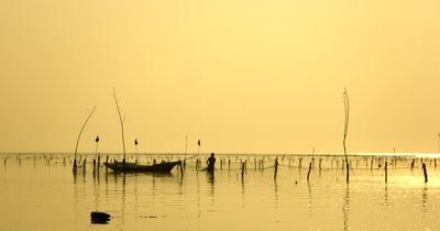 Medium Shot, during a golden Sunset, of a Silhouette of a Seaweed Farmer working on his crops,Eucheuma spp.