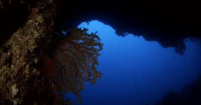 A view exiting the Sias Tunnel, with an orange Gorgonian Sea Fan, Iciligorgia schrammi , on the side