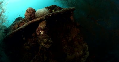 The Amatsu Maru oil tanker WWII Japanese wreck , nicknamed the Black Coral Wreck covered in Black coral and a Bubble Coral, Plerogyra simplex