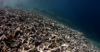 The view from a dead coral reef to a healthy coral reef