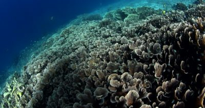 The view from healthy coral to dead coral .