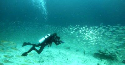 A diver films a Huge schools of Scissor-Tailed Fusilier, Caesio caerulaurea and shining silver Shrimp Scad,Alepes djedaba