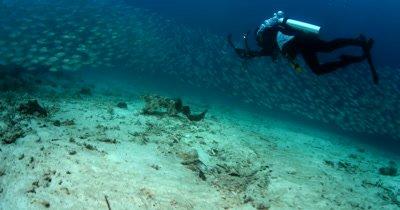 A diver filming a Tassled Wobbegong Shark, Eucrossorhinus dasypogon as a huge school of Shrimp Scad, Alepes djedaba fish pass by