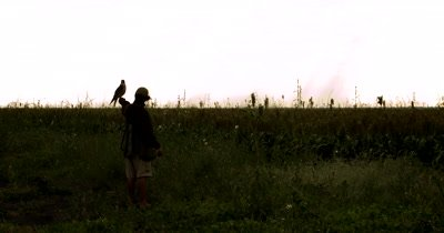 Silhouette of a Falconer handler releasing its trained Falcon,Falco sp to fly over agricultural land, chasing Quelea birds that destroy crops.