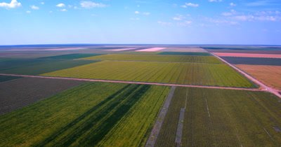 Aerial reveal  shot of the large fields of ripening Broom-corn, Sorghum bicolor,