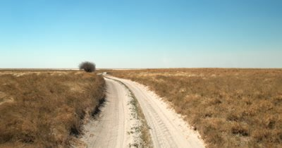 The sandy road with  Hoodia gordonii, also known as Bushman's hat or Kalahari cattus with their stunning red,orange flowers growing on the right hand side, driving towards the Makgadikgadi Pans