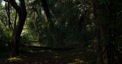 The Rainforest at Victoria falls