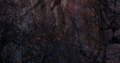 Quartzite rock face at Tsodilo Hills