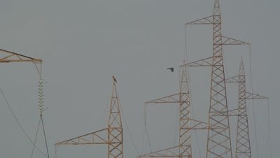 two Short toed eagles,standing on power lines trellis,one eagle takes off