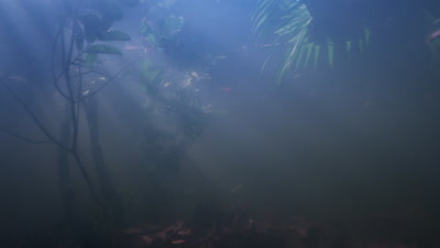 Amazon River Underwater,Sun Rays,Travel Through Plants