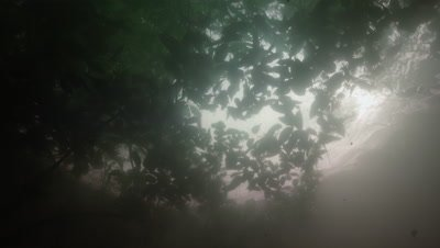 Amazon River Underwater,Looking Up Through surface to Jungle Above