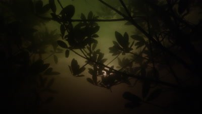 Amazon River Underwater,Backlit Aquatic Plants