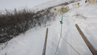 Dog Sledding In the Arctic tundra; view of Dogs from sled