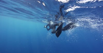 Snorkeler filming a Whale Shark feeding at the ocean surface