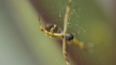Spider in Web Feeds on Prey