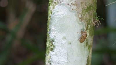 Beetle-like Insect on Tree Bark